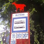 Cow at the bus stop (photo by aktualne.sk)